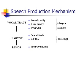 Speech-production-mechanism